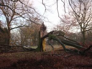 Hallmark-broken-tree-2-1024x768